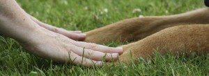 Frauenhände halten Hundepfoten ruhig auf grüner Wiese.