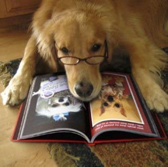 Dog with glasses reads a book. Image source CC, edited flickr.com_photos_kinjengsubmiter5