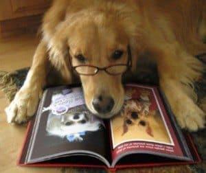 Golden Retriever mit Brille sieht sich ein Buch an. Bildquelle cc flickr.comphotoskinjengsubmiter5