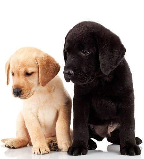 2 Puppies Await Your Donation