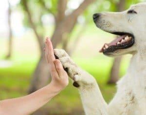 """Hund und Mensch machen """"High Five."""""""