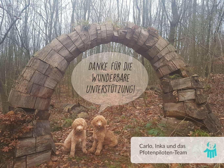 Foto Danke für die wunderbare Unterstützung :: Auf dem Foto sitzen zwei wuschelige hellbraune Hunde unter einem hölzernen Bogen. Über den Hunden steht in einer Sprechblase