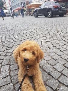 Foto Carlo macht Platz in der Fußgängerzone