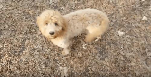 Foto hellbrauner junger Hund