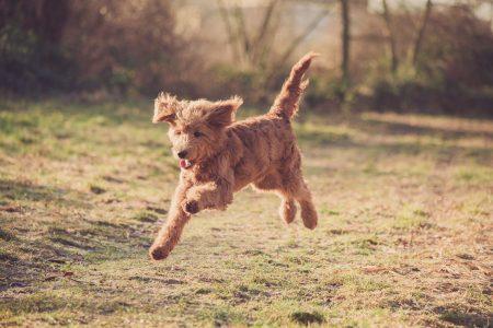 Foto herumspringender Hund