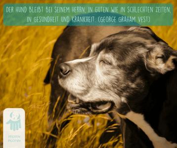 Sonnenschein mit Hund