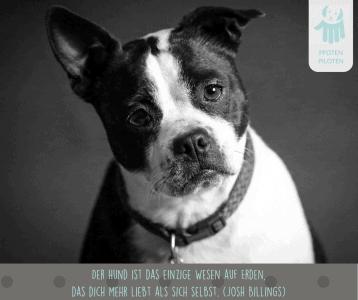 Der Hund hat immer ein offenes Ohr