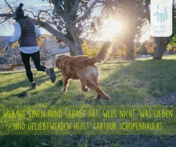 Das tolle Wetter mit dem Hund genießen