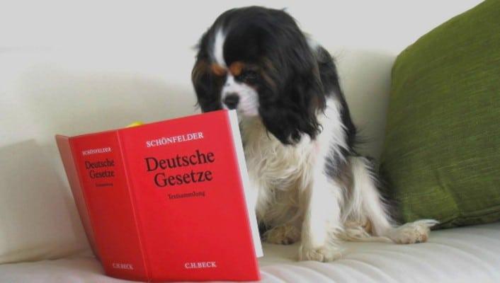 :: Auf dem Foto liest ein kleiner weiß-braun-schwarzer Hund das Deutsche Gesetzbuch. Der Hund sitzt dabei auf einem weißen Sofa und hinter ihm ist ein dunkelgrünes Kissen.