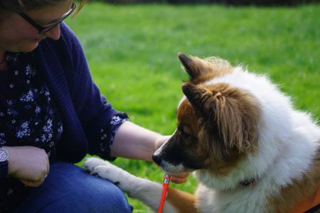 Foto Frau bekommt Spielzeug von Hund