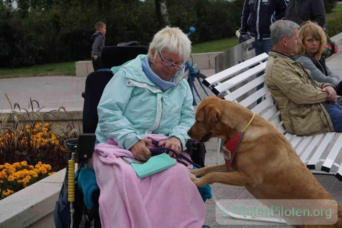 Foto mit einer Frau im Rollstuhl und einem Hund