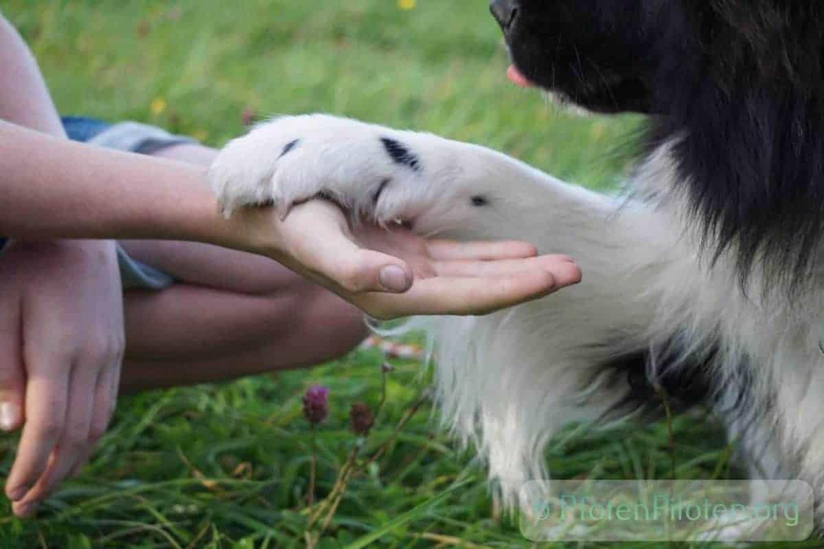 Foto Kind und Hund halten Hand und Pfote