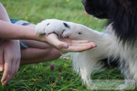 Hundepfote in Kinderhand