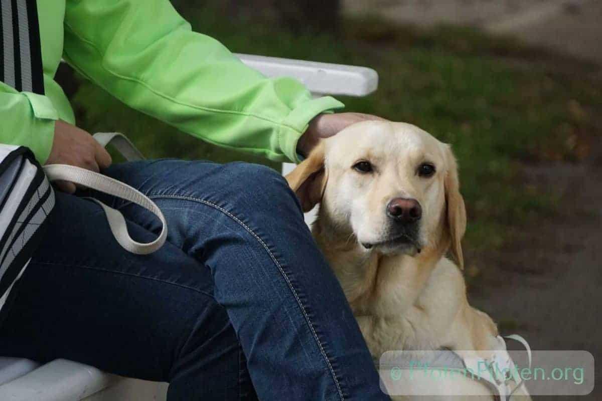 Foto Frau sitzt auf Bank mit Hund