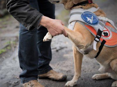Foto Blindenhund gibt Pfote
