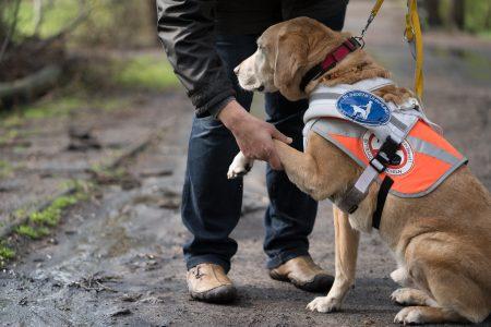 Foto Blindenführhund gibt Pfote