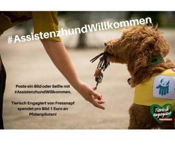 Posten Sie bis zum 11.August ein Selfie mit #AssistenzhundWillkommen, und Fressnapf Deutschland spendet einen Euro dafür an Pfotenpiloten.