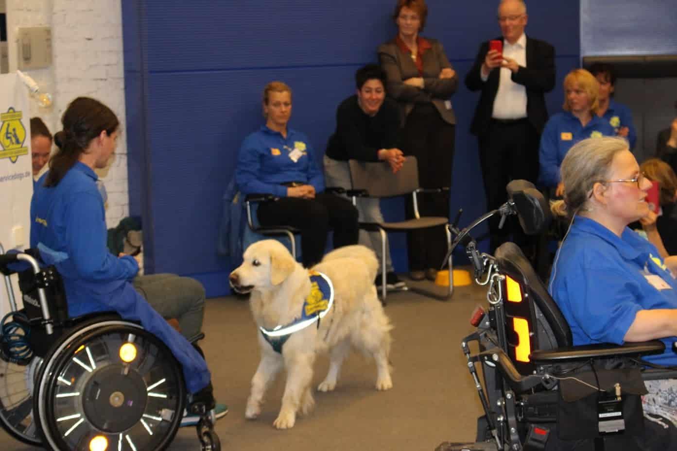 Foto Vorführung Veranstaltung im Bundestag :: Auf dem Foto sieht man wie der Assistenzhund Mars zu seiner Halterin blickt. Die junge Assistenzhundehalterin sitzt im Rollstuhl. Im Hintergrund sind Zuschauer zu sehen.