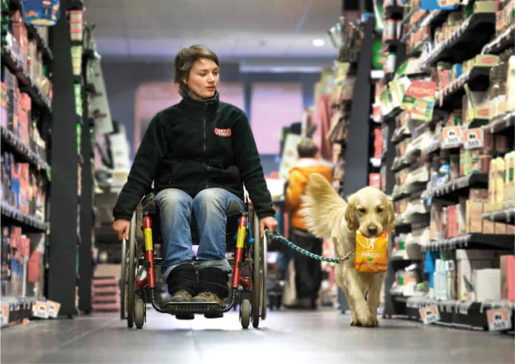 Assistance dog team in supermarket :: A young woman rides in a wheelchair down a supermarket aisle toward the viewer. She looks down at her golden retriever assistance dog, which runs joyfully wagging its tail to her left, carrying a shopping item in its mouth.