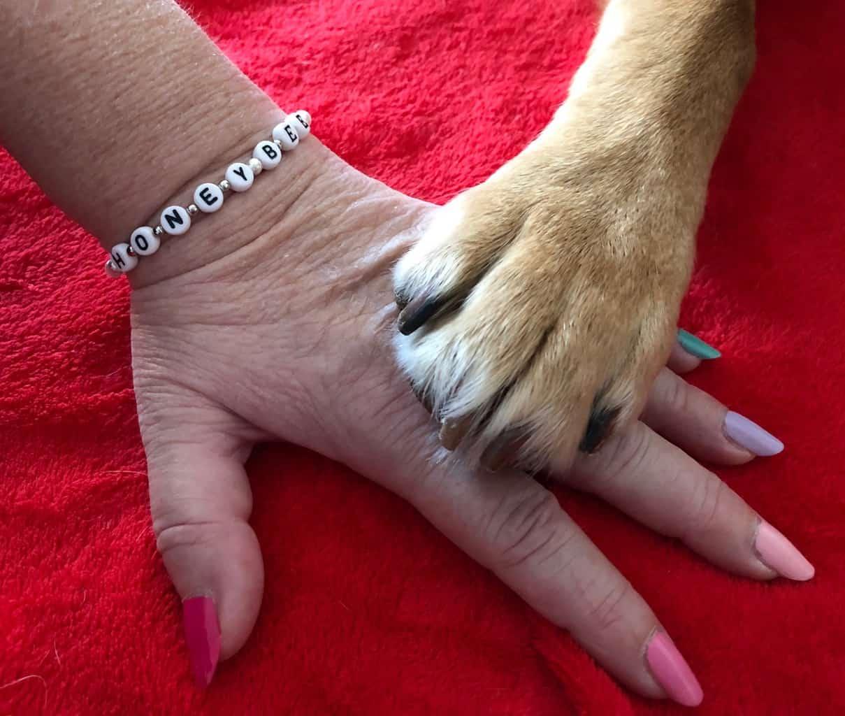 Labradorphote auf Frauenhand. :: Eine Labradorpfote liegt freundschaftlich auf einer gepflegten Damenhand. Ein Armband buchstabiert den Namen von Assistenzhund Honey Bee.