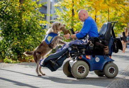 Assistenzhund gibt Halter im Rollstuhl seine Mütze