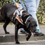 Blindenführhund führt Treppe hinunter