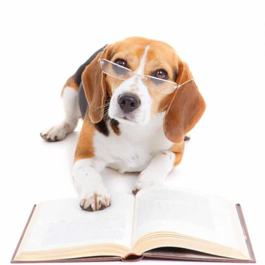 Hund mit Brille liest Buch